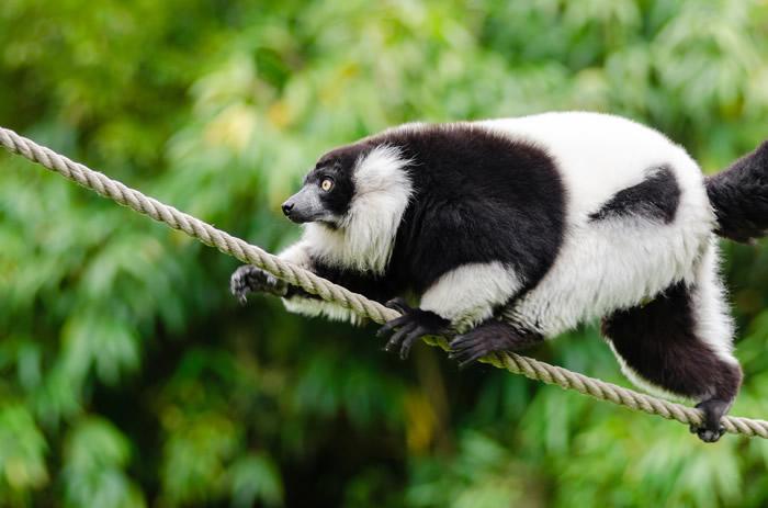 lemurimageee