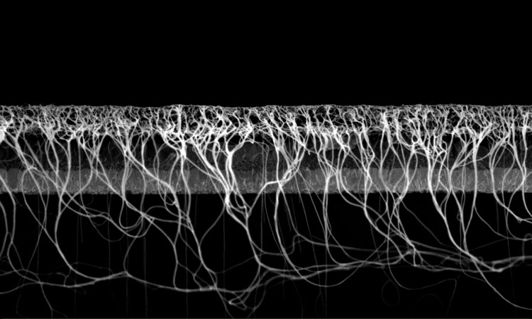 nanotube_solar